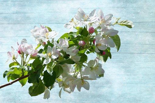 Blossom, Bloom, Flowering Twig, White, Blossom, Flowers