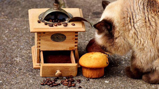 Grinder, Muffin, Cat, Curious, Cake, Coffee