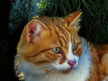 Cat, Stray, Animal, Face, Eyes, Street, Portrait