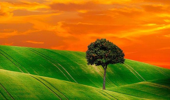 Orange Tree, Tree, Nature, Fruits, Plant, Periwinkle