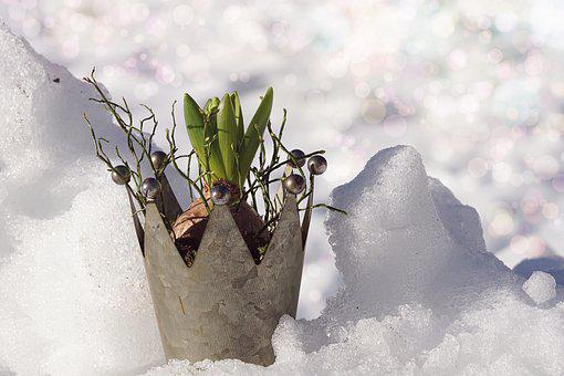 Nature, Snow, Growth, Winter, Cold, Environment, Plant