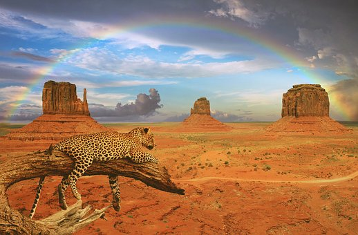 Fantasy, Leopard, Rainbow, Monument Valley