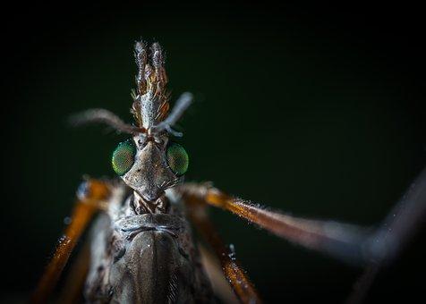 Insect, Bespozvonochnoe, Nature, Living Nature, Macro