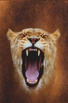Mati, Portrait, Mammals, Cat, Animals, Nature, Lion