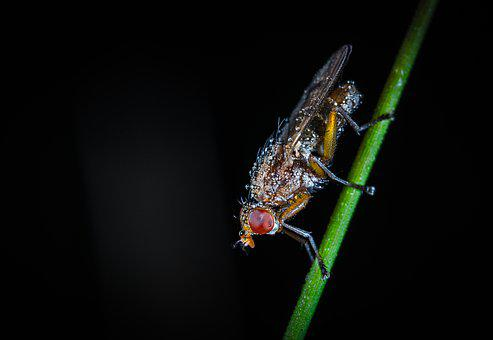 Insect, Fly, Animals, Nature, No One, Rosa, Drops, Stem