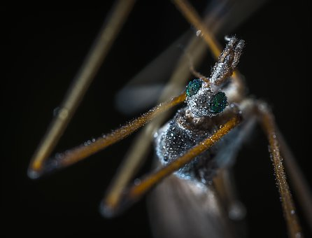Bespozvonochnoe, Insect, Nature, Living Nature