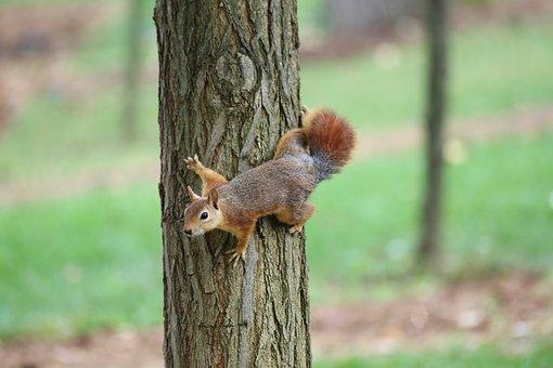 Wood-fibre Boards, Nature, Tree, Outdoor, Squirrel