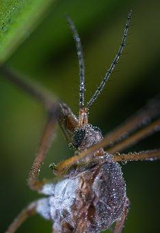 Insect, Outdoors, Nature, Bespozvonochnoe