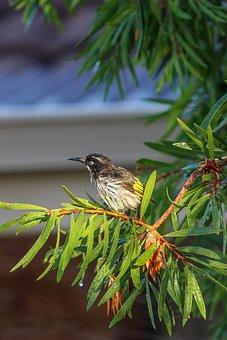 Nature, Tree, Outdoors, Bird, Garden, Branch, Wild