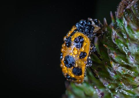 Bespozvonochnoe, Insect, No One, Nature, Outdoors