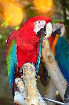 Parrot By Temperament, Bird, Tropic, Nature