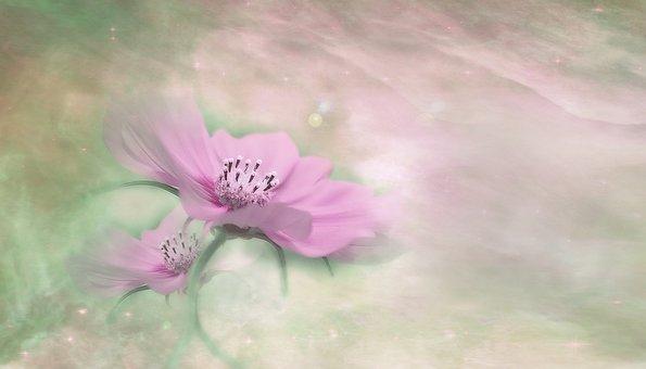 Blossom, Bloom, Flower, Plant, Close, Flowers, Macro