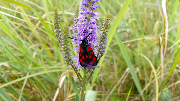 Nature, Plant, Flower, Summer, Lawn, Butterfly, A Moth