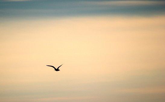 Bird, Flying, Sky, Flight, Fauna, Black, Alone, Single