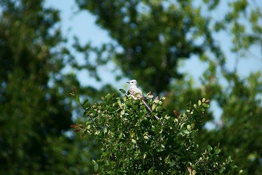 Bird, Birding, Nature, Wildlife, Tree