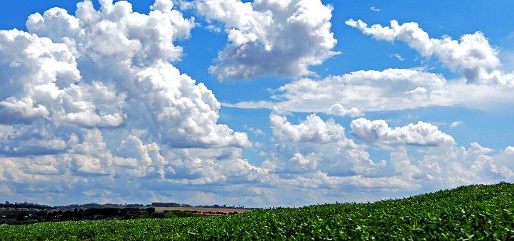 Sky, Cloud, Soybeans, Plantation, Road, Clouds
