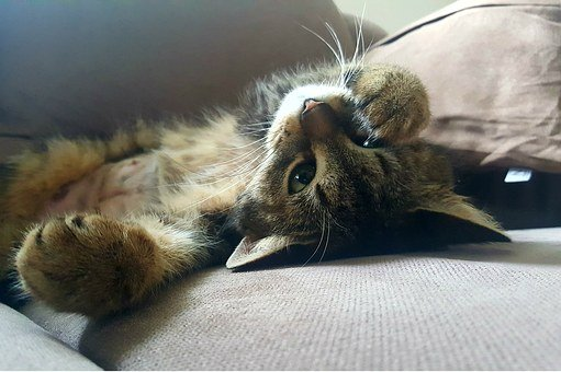 Cat, Domestic Cat, Lazy, Laziness, Rest, Relax, Mood