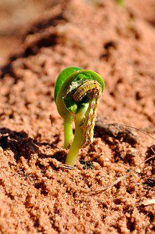 Soybeans, Agriculture, Insect, Farm