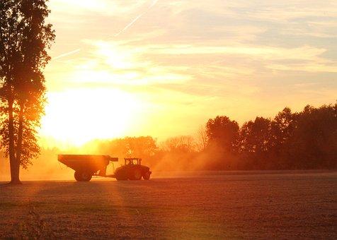 Harvester, Harvest, Farming, Soybean, Sunset
