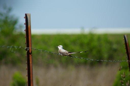 Bird, Birding, Nature, Wildlife, Fence