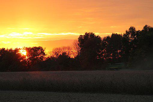 Sunset, Soybean, Harvest, Sky, Field, Agriculture
