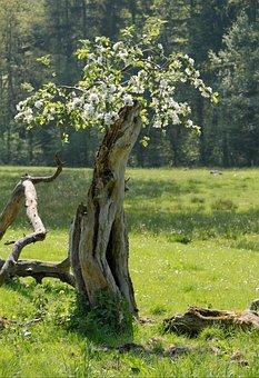 Log, Blossom, Tree, Wood, Old, Nature, Plant, Transient