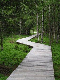 Boardwalk, Wooden Track, Forest, Moor, Marsh, Web