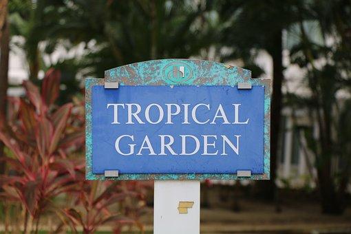 Tropical, Garden, Hilton, San, Juan