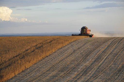 Harvest, Soybeans, Plantation, Cotton Gin, Grains