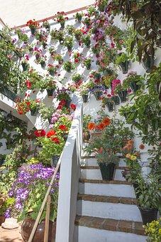 Courtyards, Cordoba, Patios De Córdoba, Spain, Flower