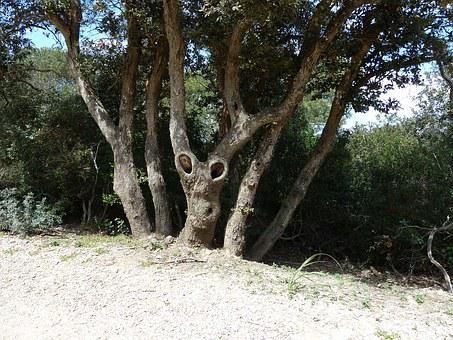 Tree, Twisted, Tortuous, Porquerolles, Face, Strange