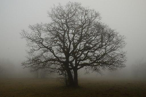 Tree, Branches, Fog, Solitude, Shade, Earth, Autumn