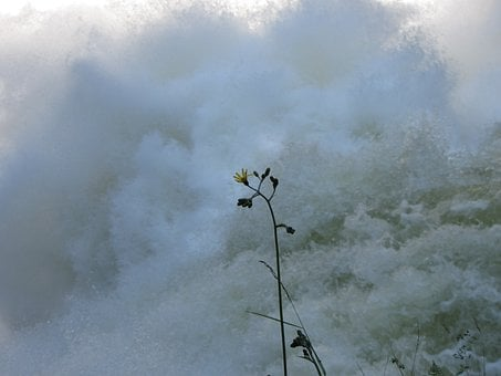 Flower, Water, Power, Awesome, Waves, Current, River