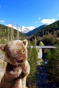 Wombat, Fun, Marsupial, Puppet, Creature, Animal