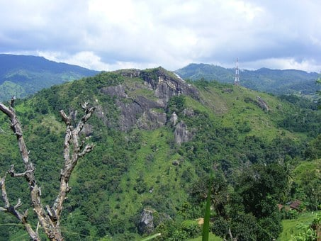 Mountains, Hills, Greenery, Flora, Trees, Plants, Woods