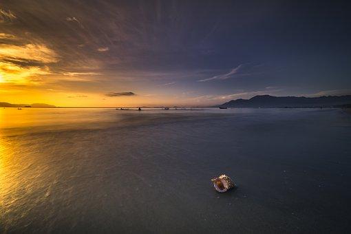 The Beach, Scalloped, Animal, Animal Shell, Balance