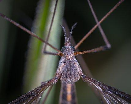 Insect, Bespozvonochnoe, No One, Macro