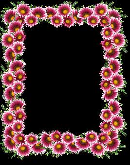 Frame, Border, Sun Daisies