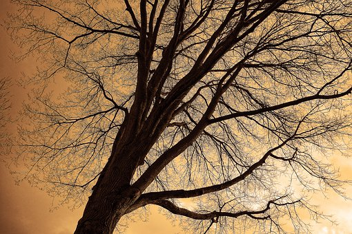 Tree Top, Tree, Trunk, Branches, Bare Branches