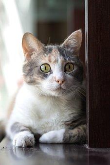 Cat, Pet, Nice, Animalia, Domestic, Kitten