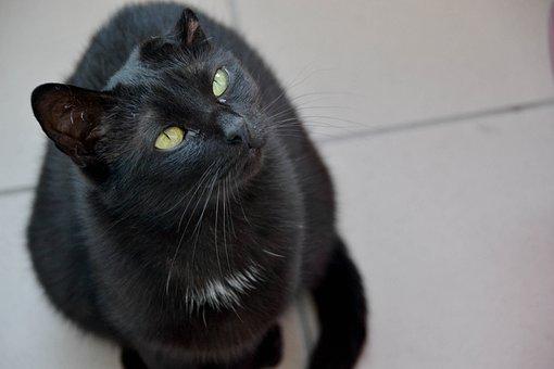 Cat, Black Cat, Cat's Eyes, Sitting Cat, Cat Staring