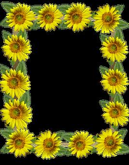 Frame, Border, Sunflowers