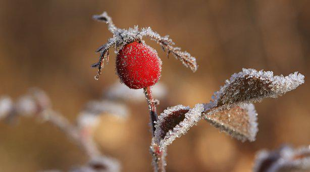 Winter, Nature, Close Up, Frost, Snow, Flowers, Ball