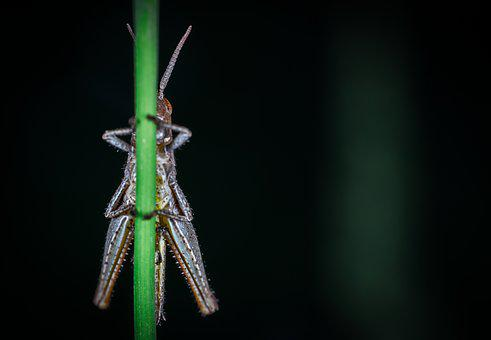 Insect, Nature, No One, Grasshopper, Stem, Macro, Filly