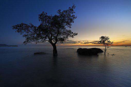 The Sun, Phuquoc, Island, Vietnam, The Beach, Mangrove