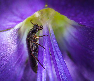 Insect, Nature, Flower, Plant, Summer, Beetle, Macro