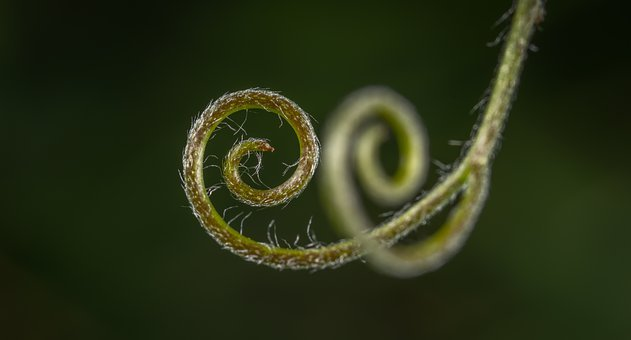 Nature, Background, No One, Sheet, Spiral, Mustache