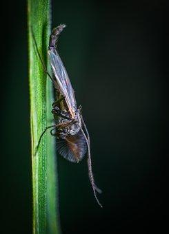 Insect, Bespozvonochnoe, Nature, No One, The Mosquito
