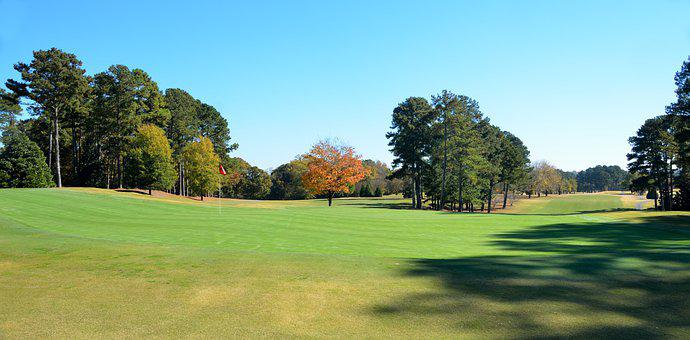 Golf, Grass, Tee, Nature, Course, Hole, Tree, Putt