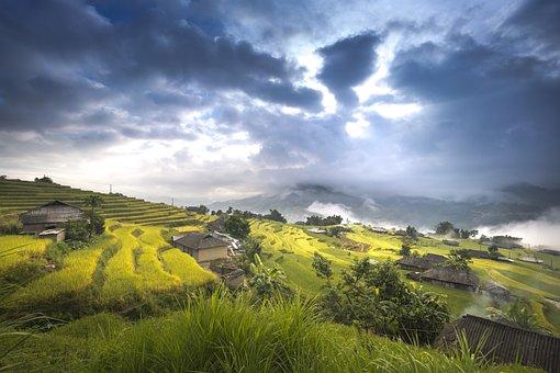 Vietnam, Rice, Rice Field, Ha Giang, Terraces